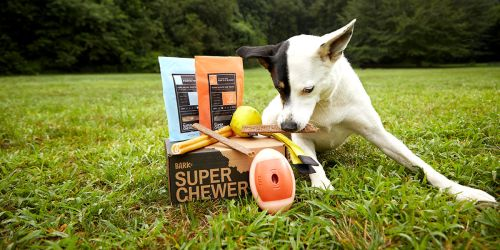 Get 50% Off Your First Super Chewer BarkBox Dog Toy Box + FREE Shipping