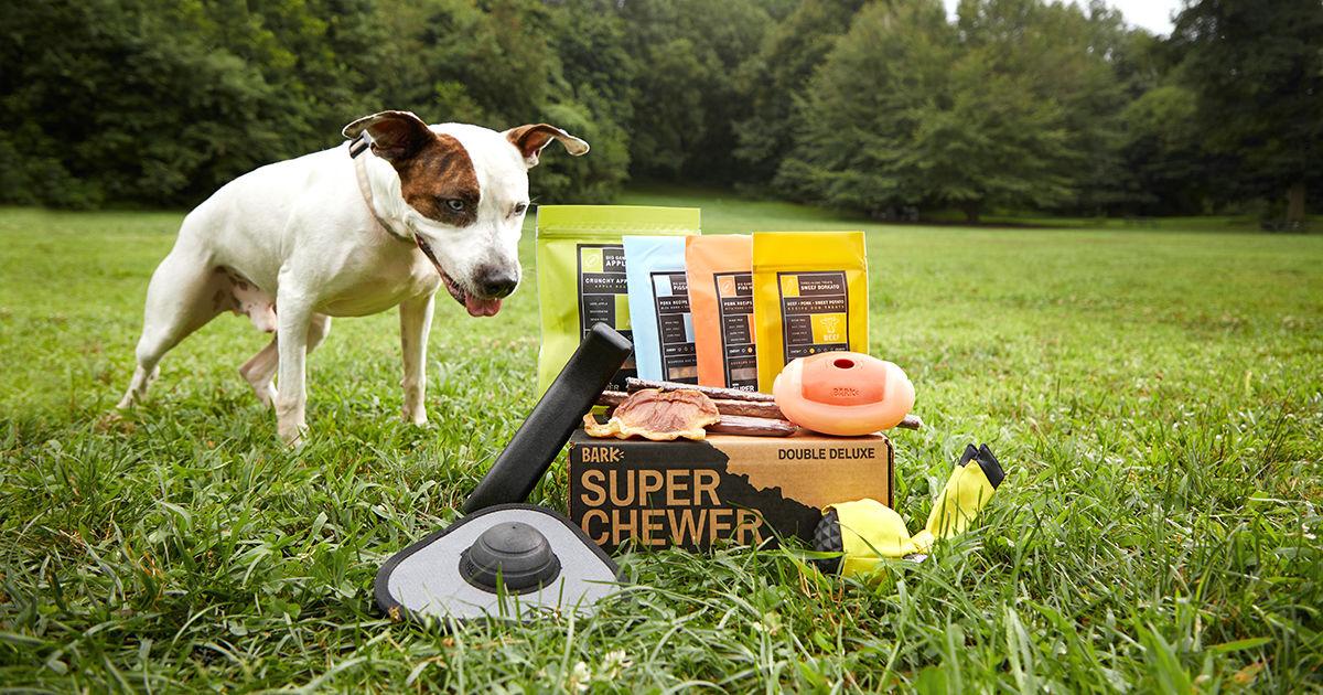 Dog in yard Bark Super Chewer Box