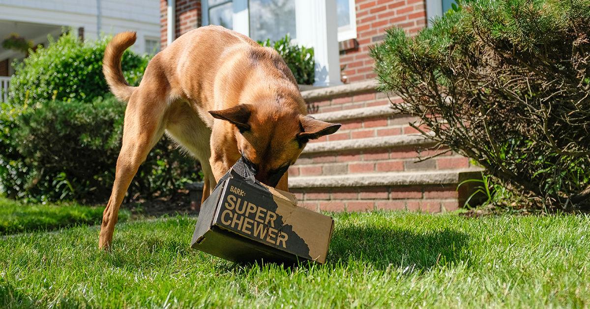 dog tearing up bark super chewer box
