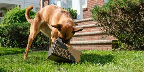 Score a Complimentary Memory Foam Bed w/ Super Chewer Box Subscription ($67 Value)
