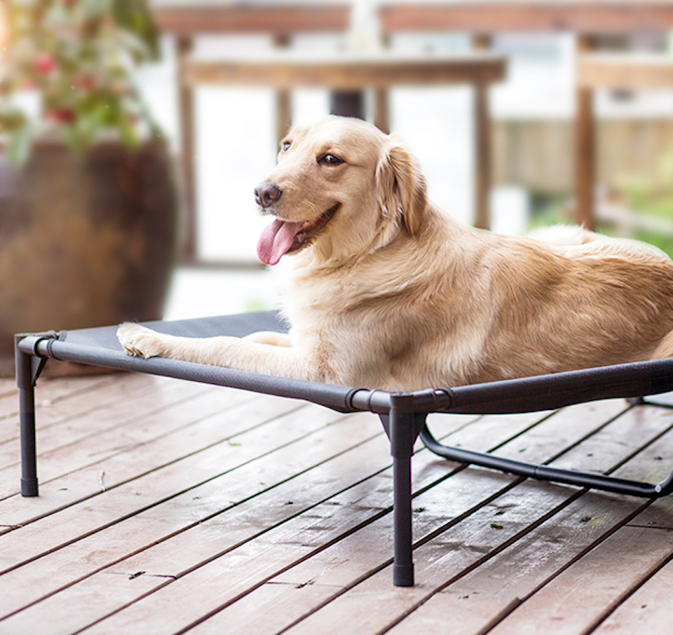dog on an elevated bed