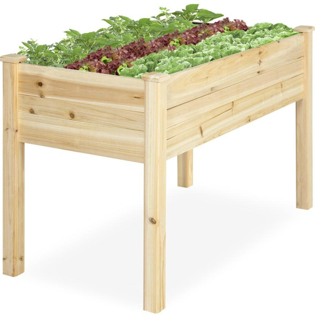 Plants growing from Elevated planter