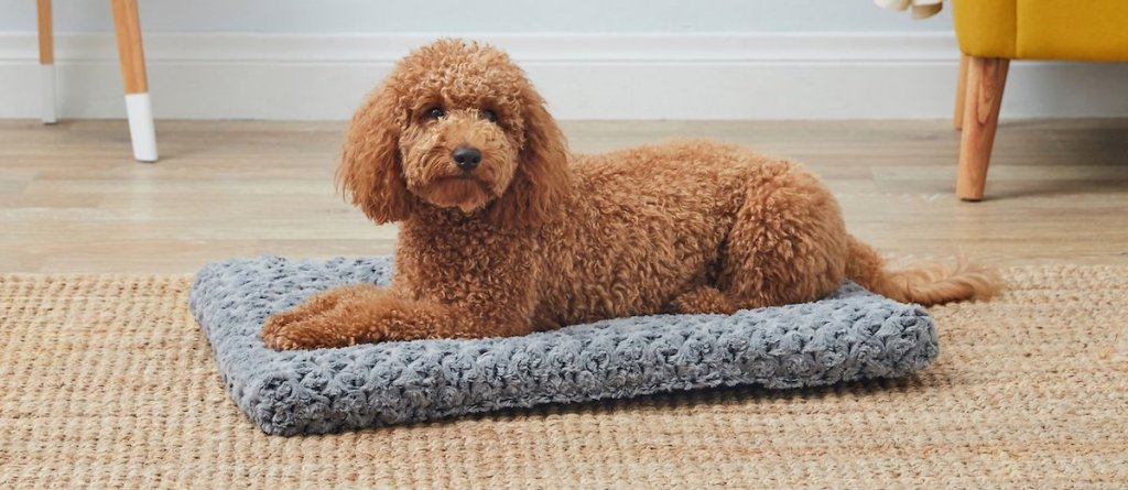 dog laying on a grey pet bed
