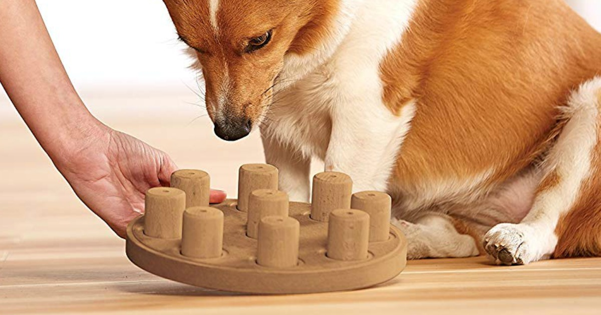 dog looking at dog puzzle