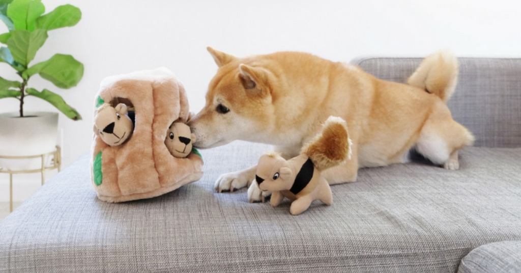 dog sitting on couch by toy