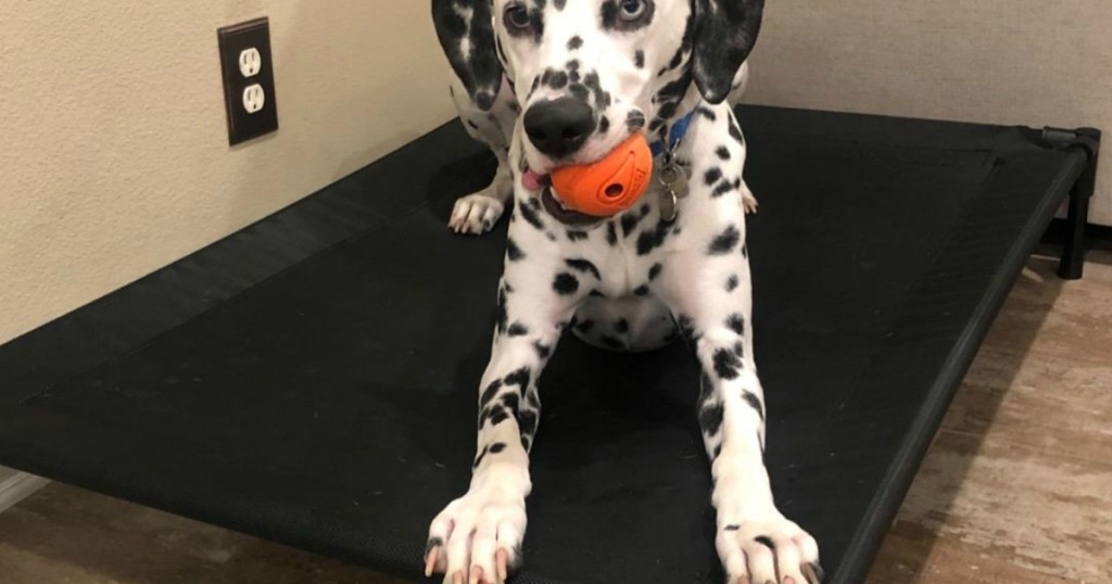 black and white spotted dog on dog bed