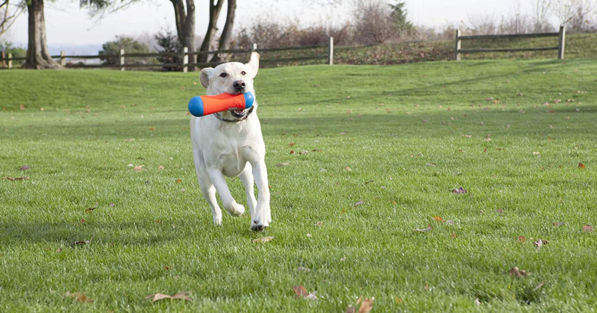 dog playing with tumble bumper toy