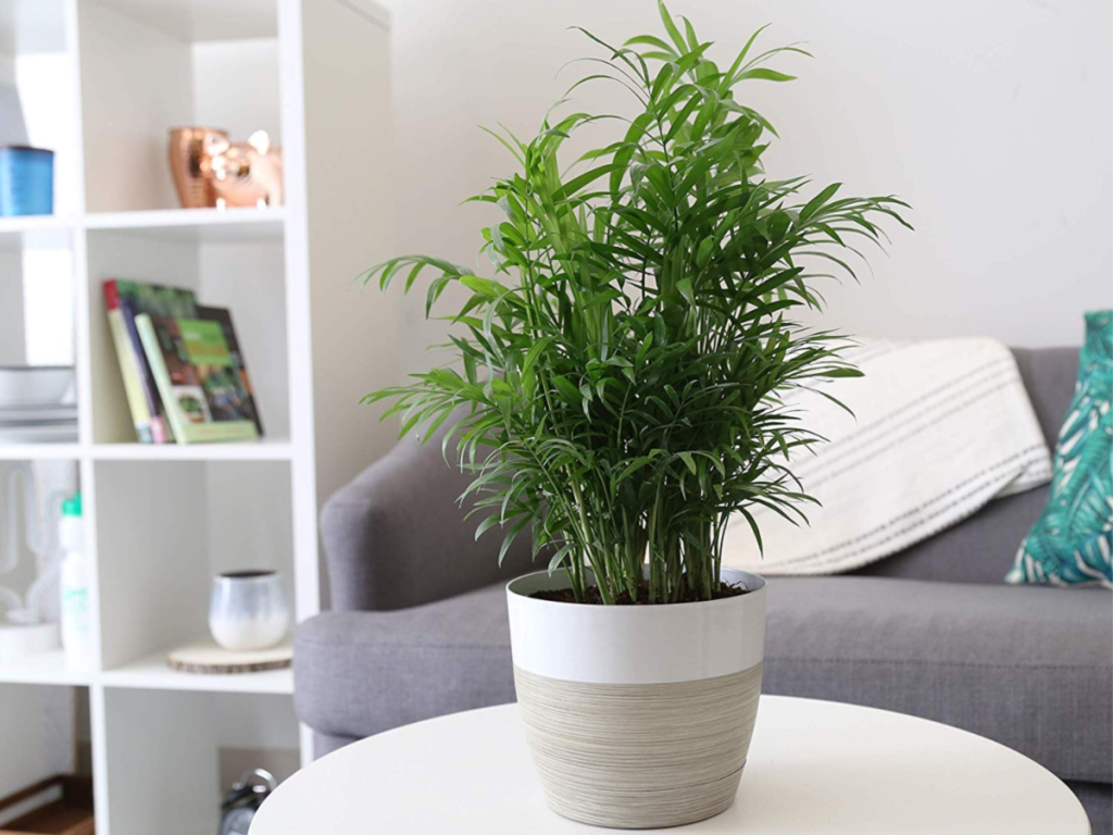 plant in white and grey planter sitting on round white cofffee table