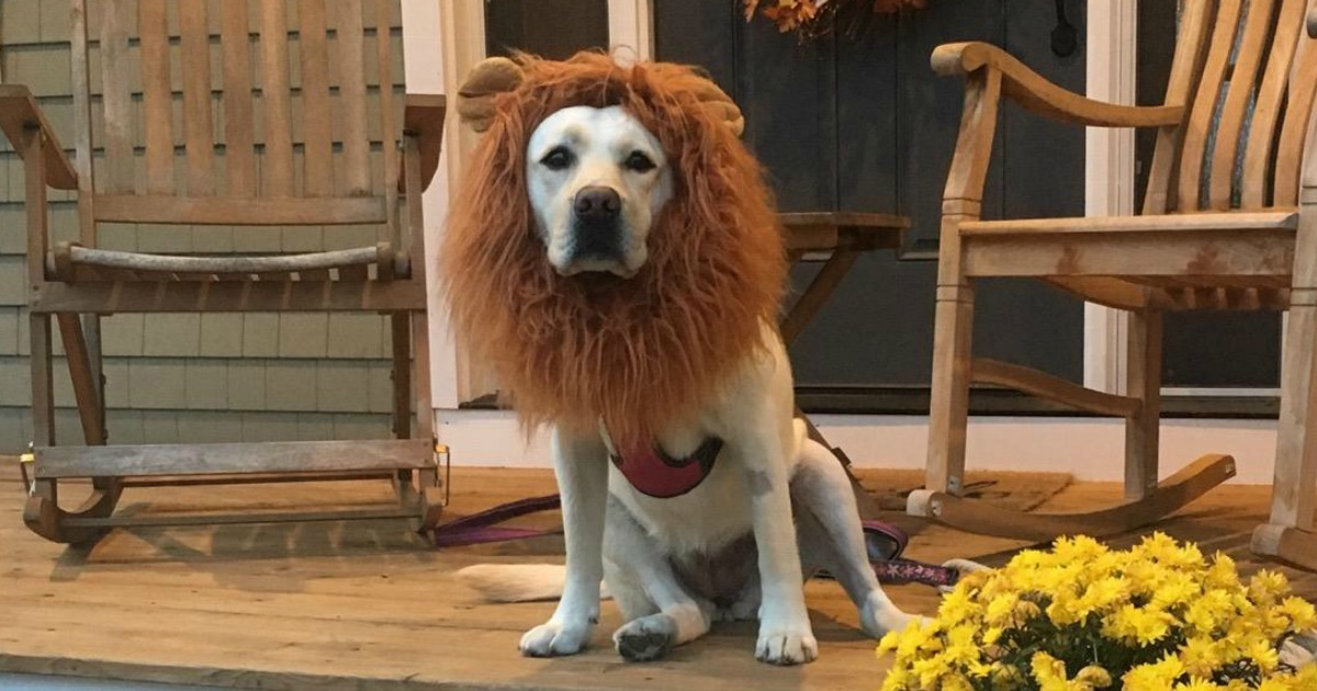 10 Cute Halloween Pet Costumes for Dogs & Cats