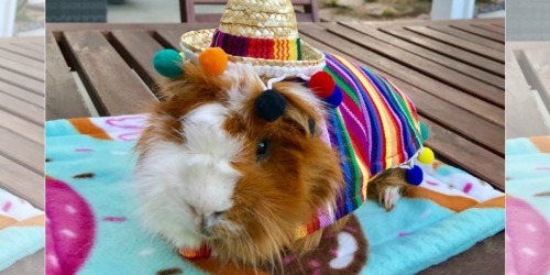 PetSmart Has Halloween Costumes For Guinea Pigs, Bunnies & More Priced as Low as $5.99