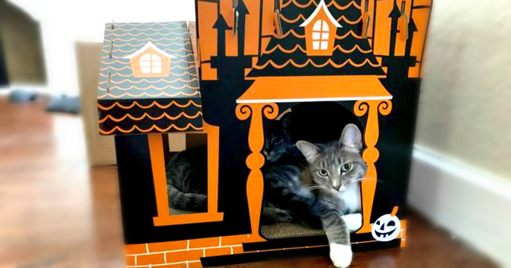 cat sitting in Hyde & EEK! Boutique Halloween Cat Scratcher house