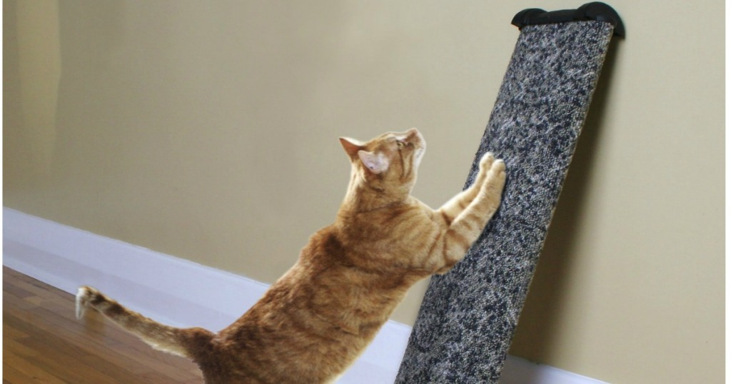 cat is scratching on an Omega Paw Lean-It Cat Scratching Post