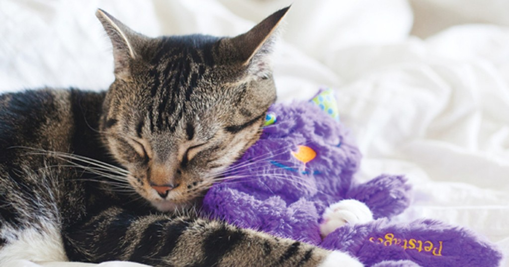 cat sleeping with petstages purr pillow
