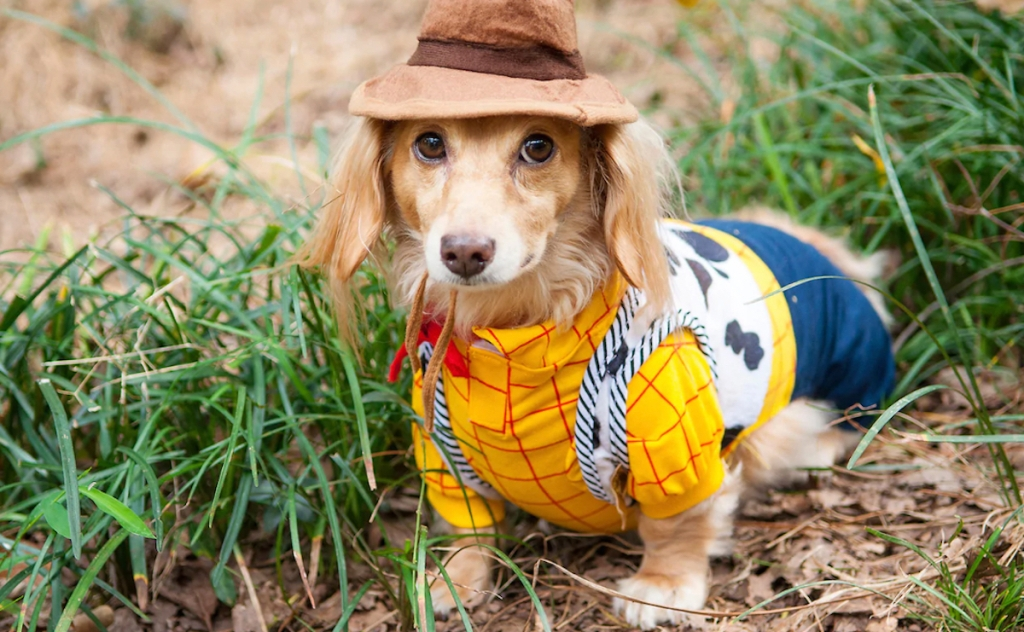 Dog wearing toy story woody costume
