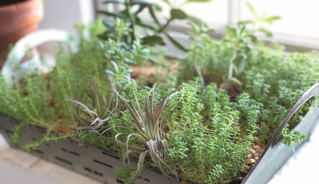 What Are Air Plants And How To Care For Them Hip2save