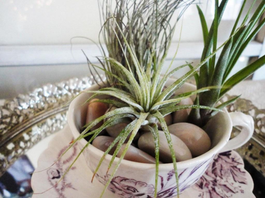 green air plants in tea cup