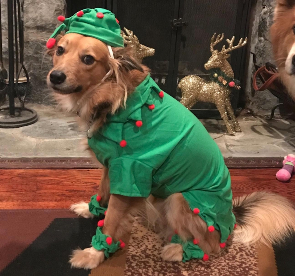 dog wearing green and red elf costume
