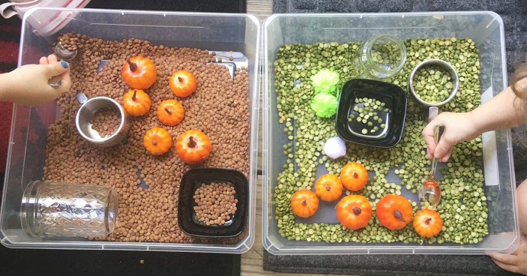 Sensory bins with pumpkins and dried lentils