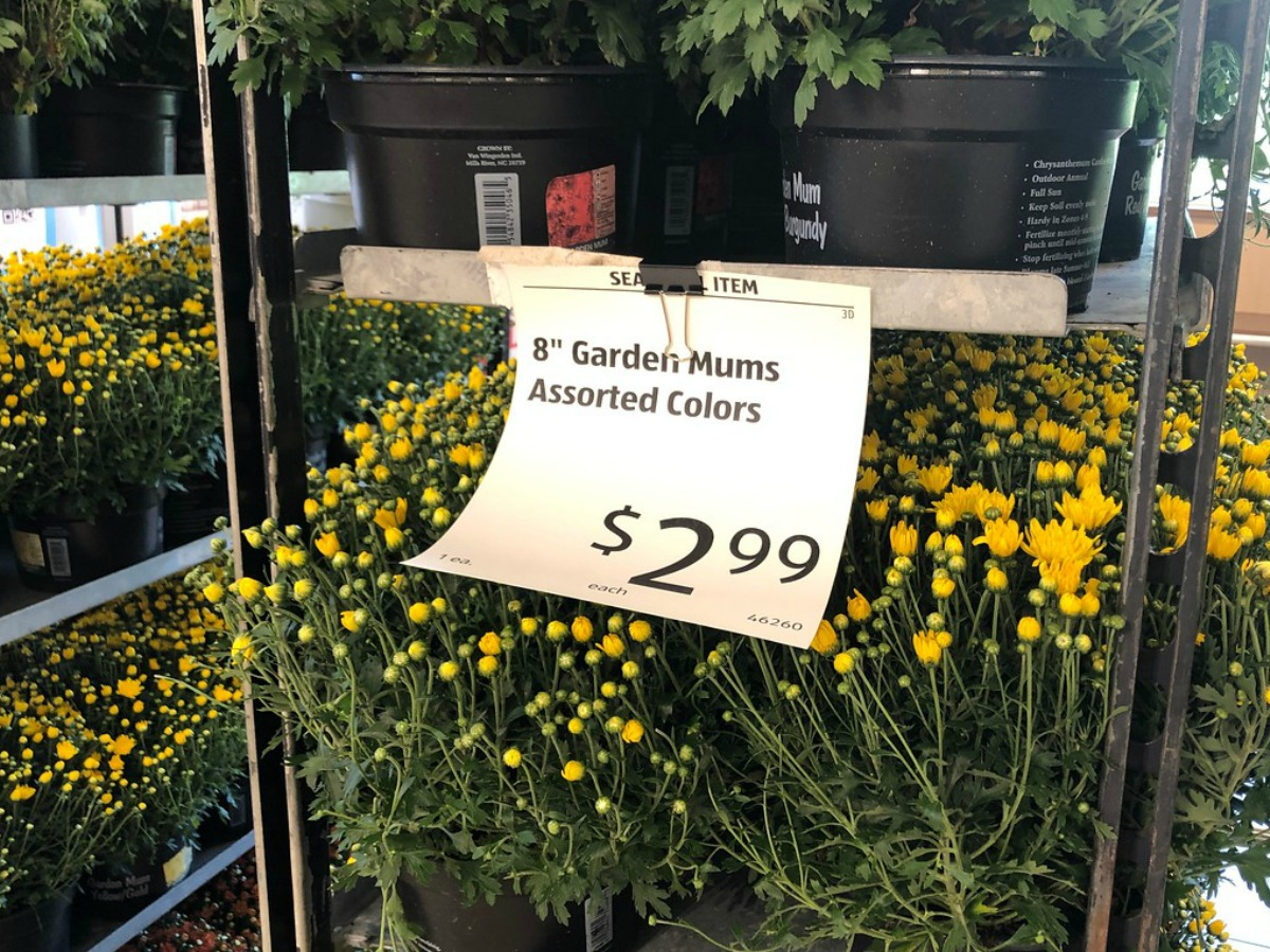 price tag on flowers in a store