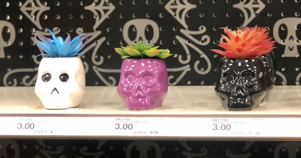 succulents in skulls