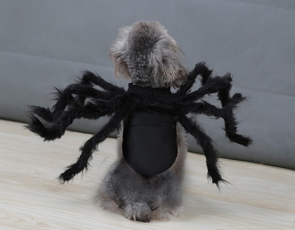 gray cat dog wearing black spider costume