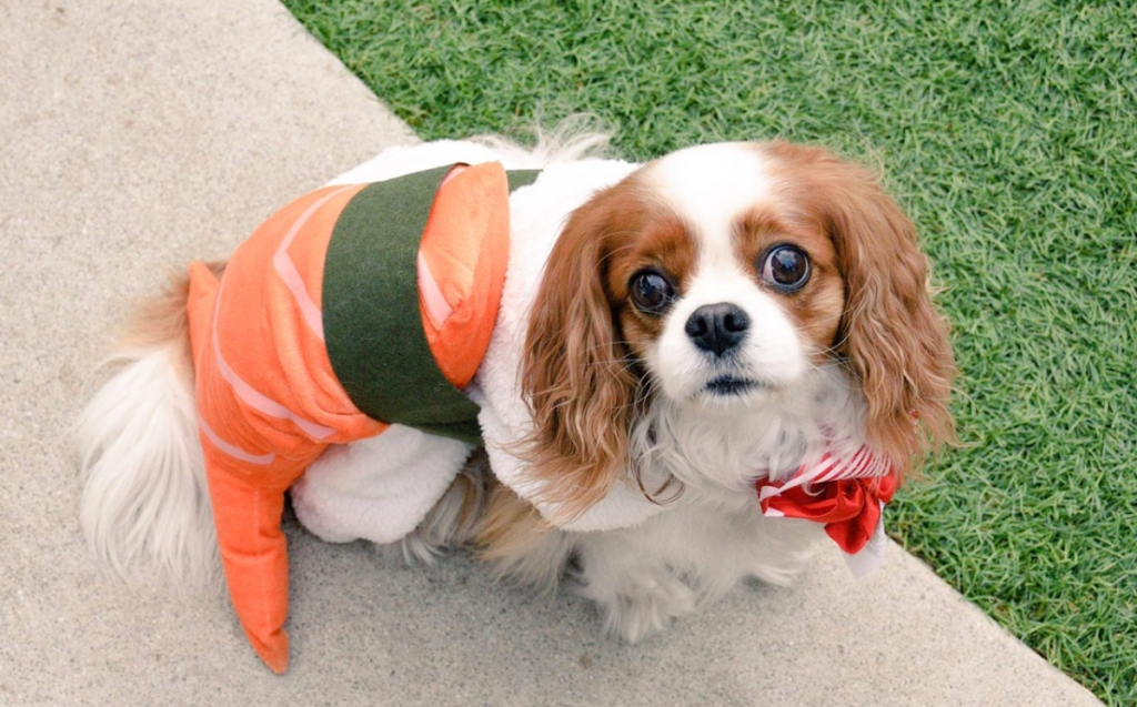dog wearing a sushi costume
