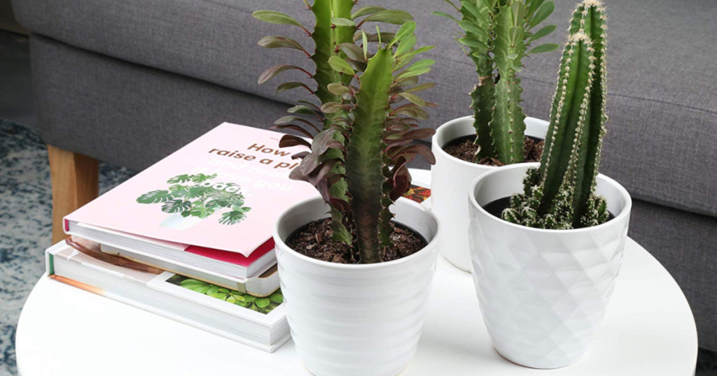 three plants in white planters on white circle table with books