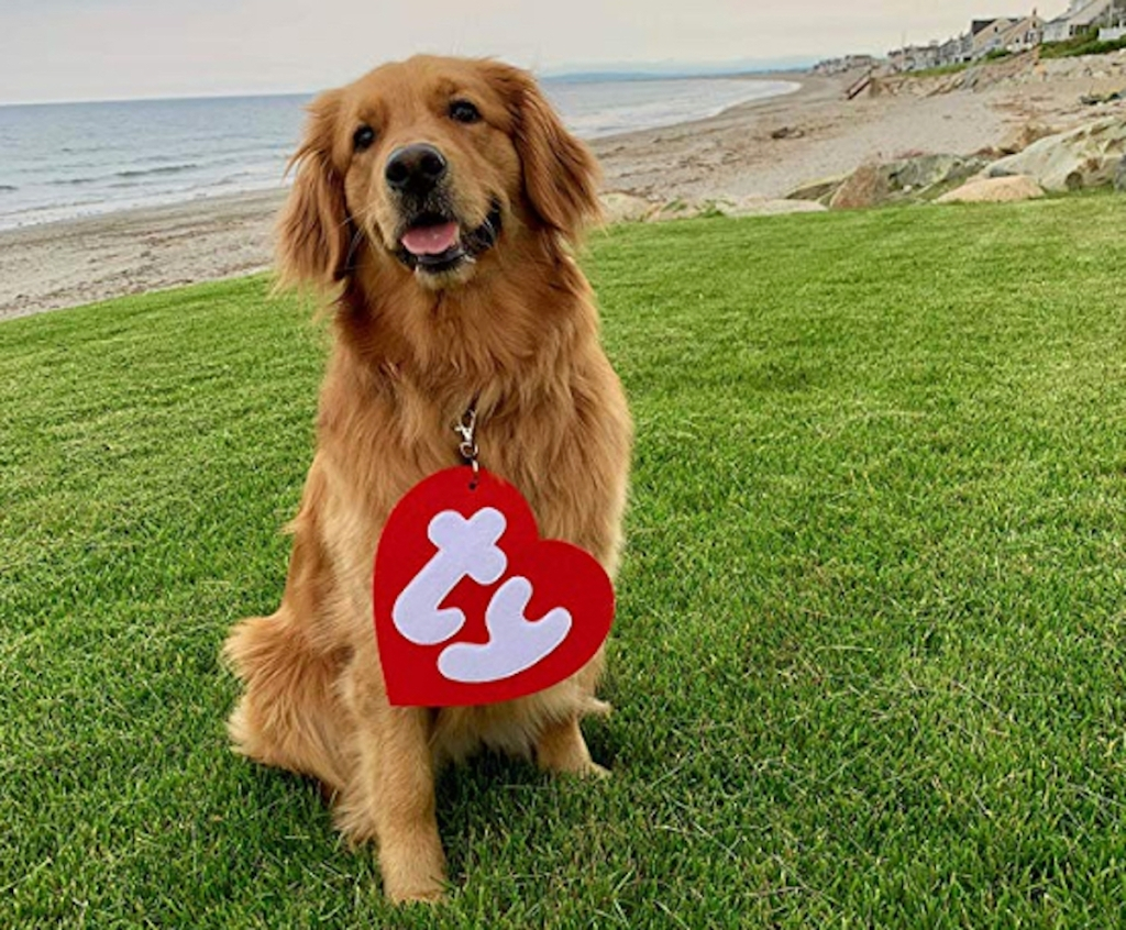 ty beanie baby red tag on dog at beach