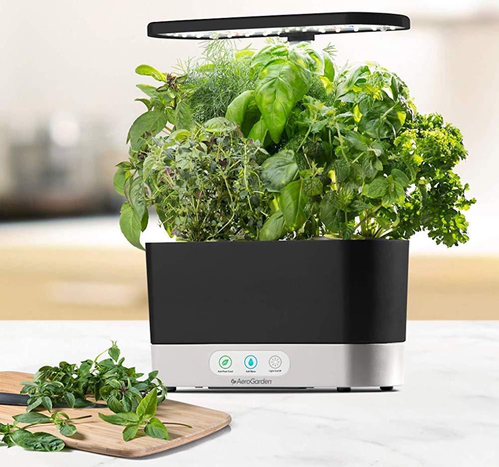 AeroGarden Harvest with herbs