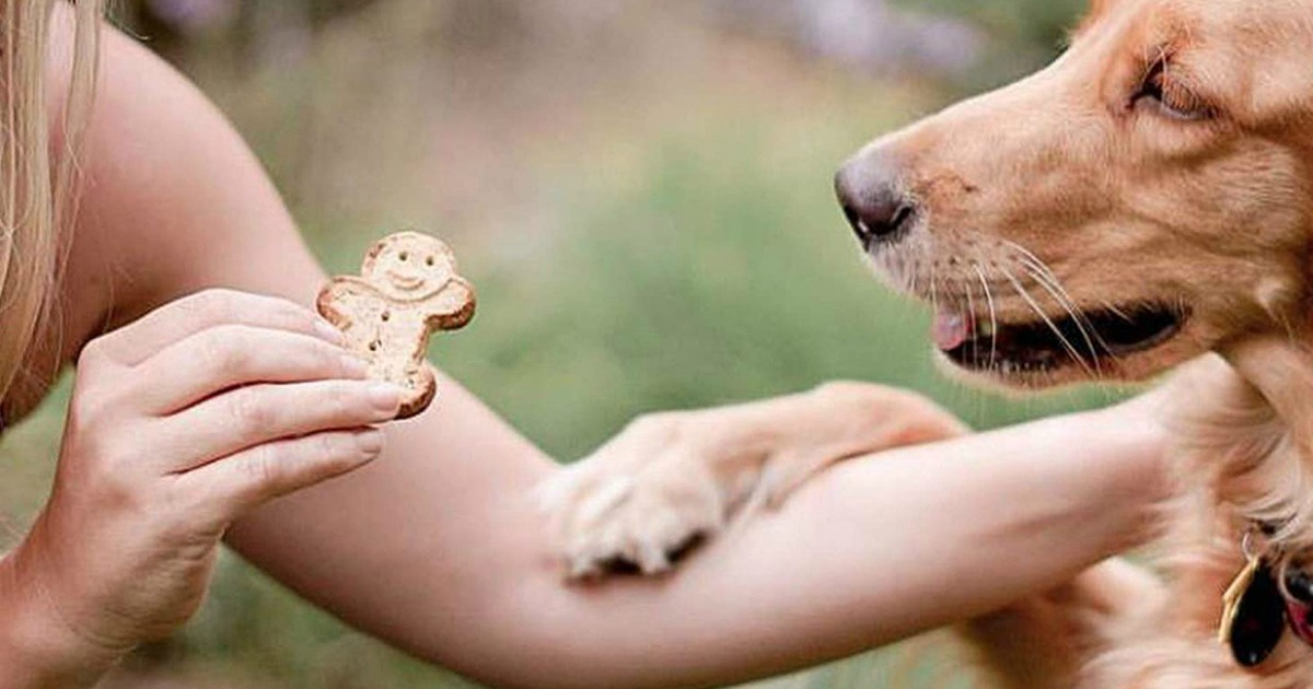 woman holding treat out for dog