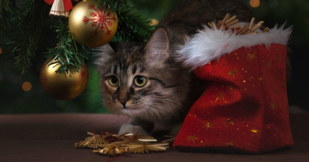 cat next to Christmas tree and stocking