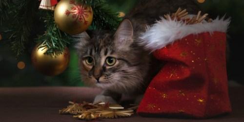 Trader Joe's is Releasing an Advent Calendar for Cats
