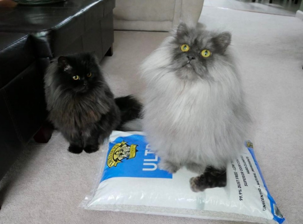 cats sitting on and near Dr. Elsey's cat litter bag