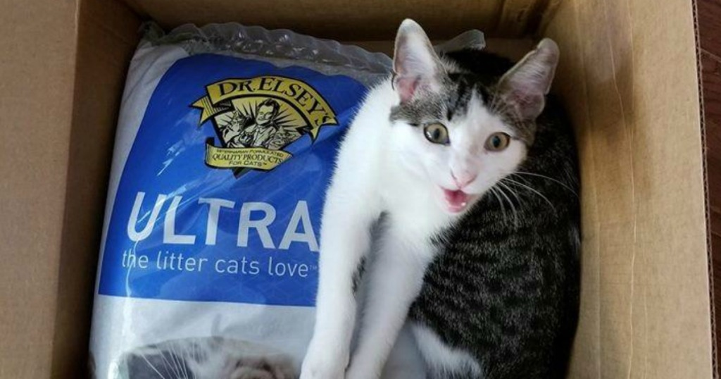 cat in a box with Dr. Elsey's cat litter