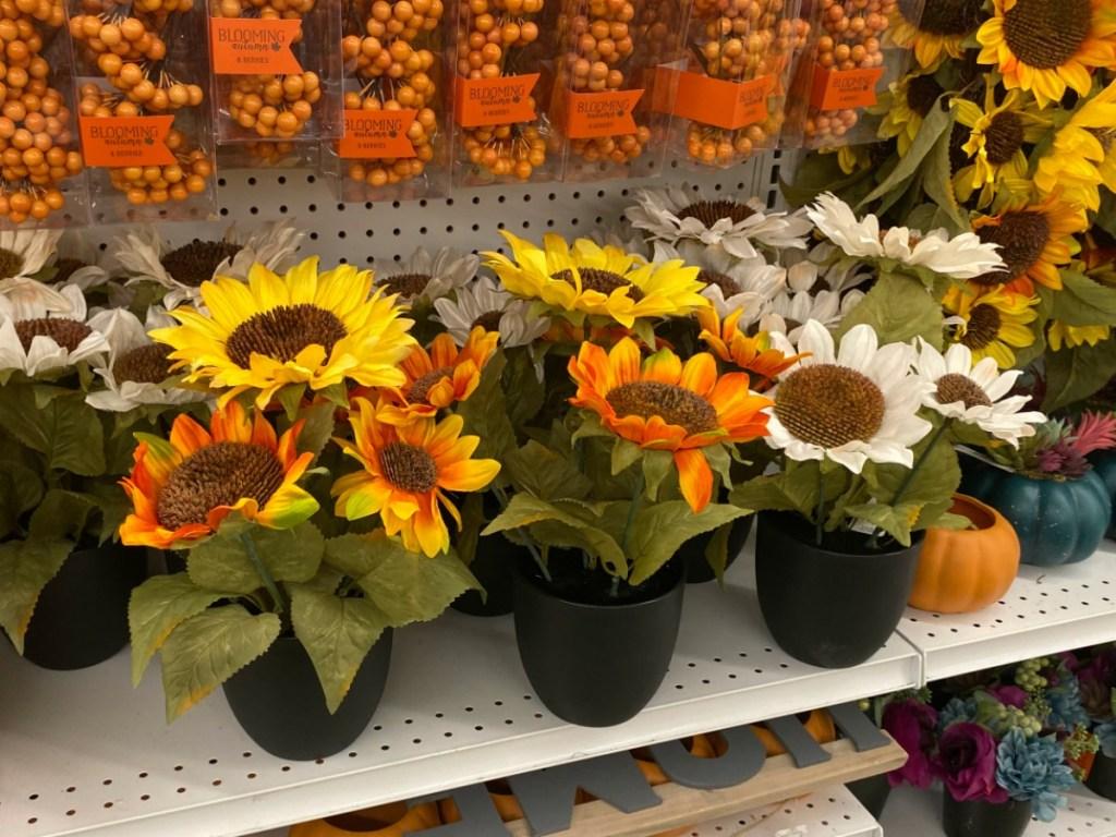 Joann's Sunflower Plants