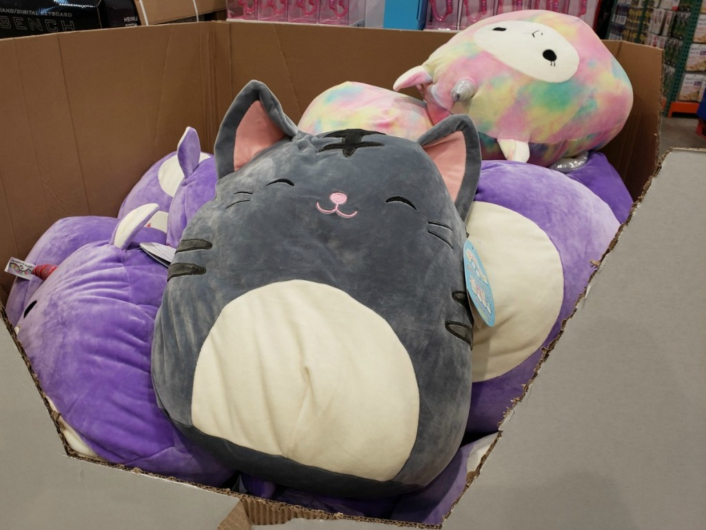 Gray kitty extra large Squishmallow plush in box in-store display at Costco warehouse