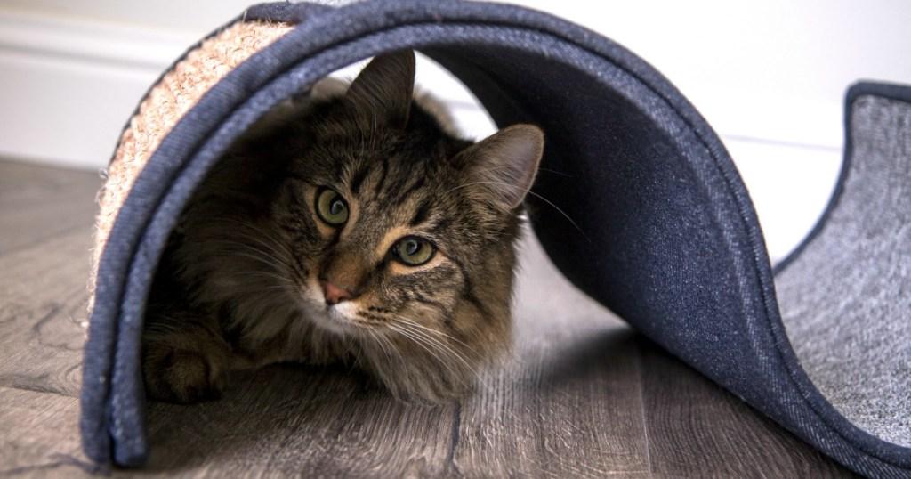 Pet Curl Scratcher with cat hiding under it