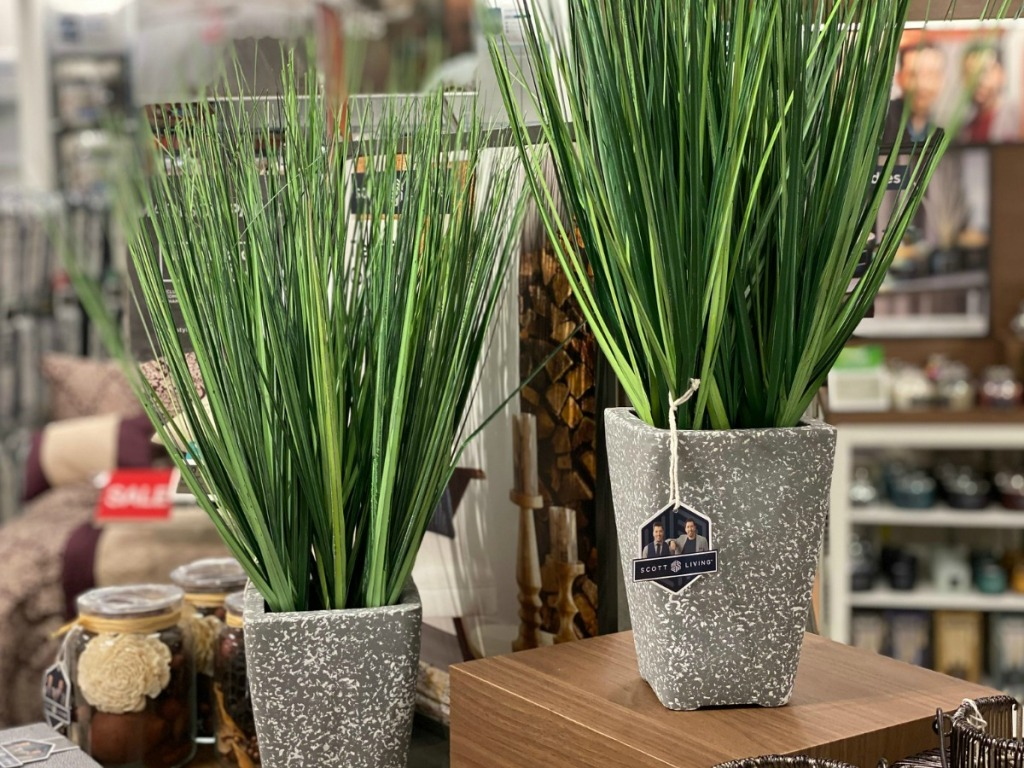 Grass plant home decor in store at Kohl's on display