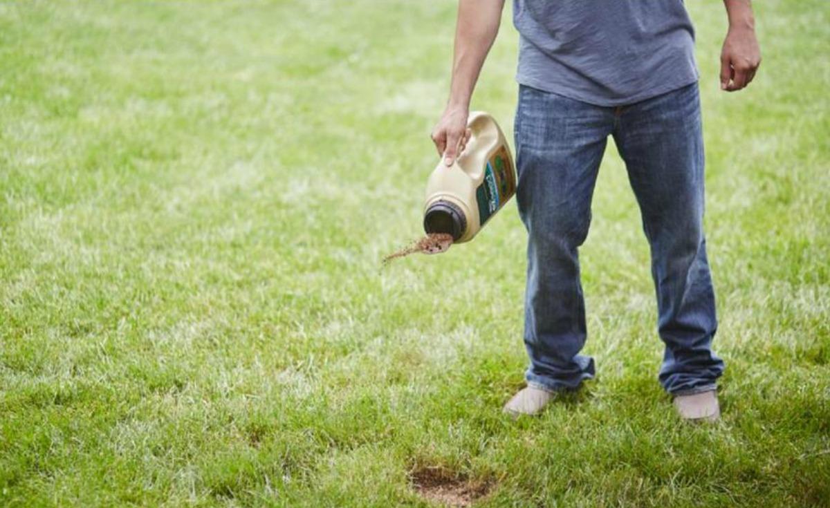 Man sprinkling lawn repair onto his yard