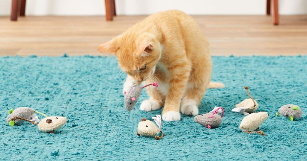 Cat playing with SmartyKat Cat Toys