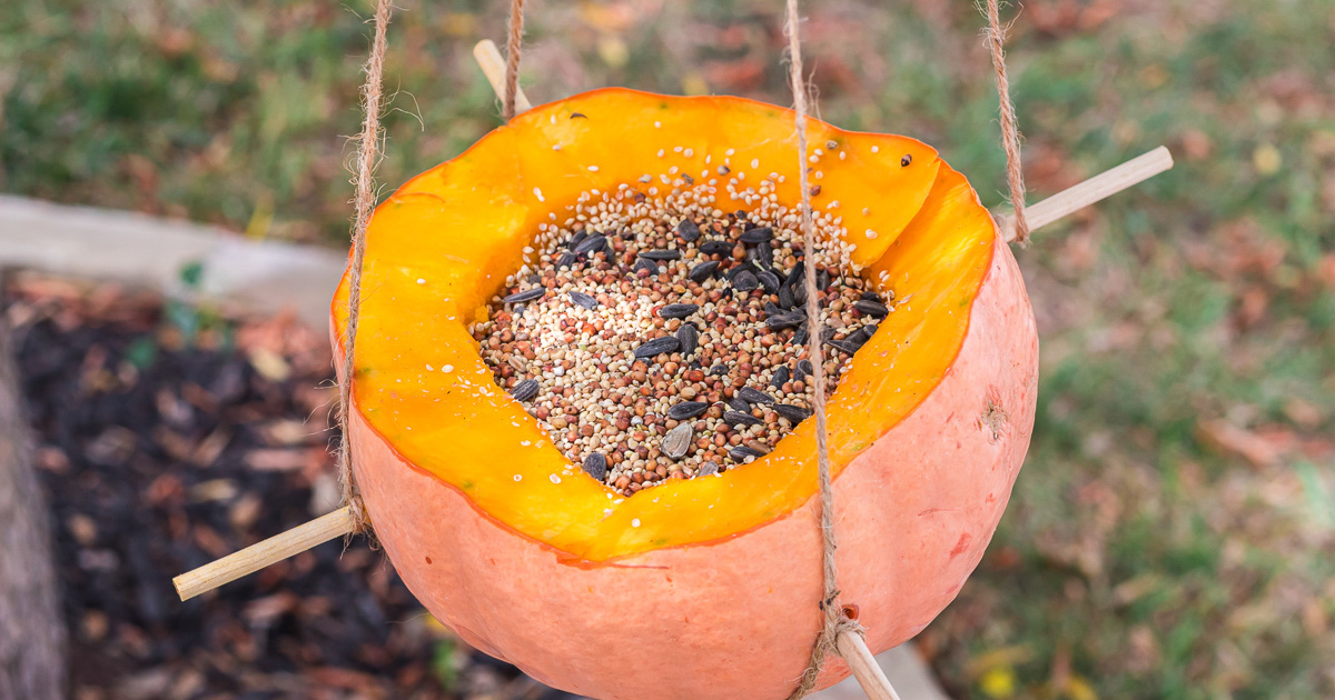 Easy Diy Pumpkin Bird Feeder Fun Fall