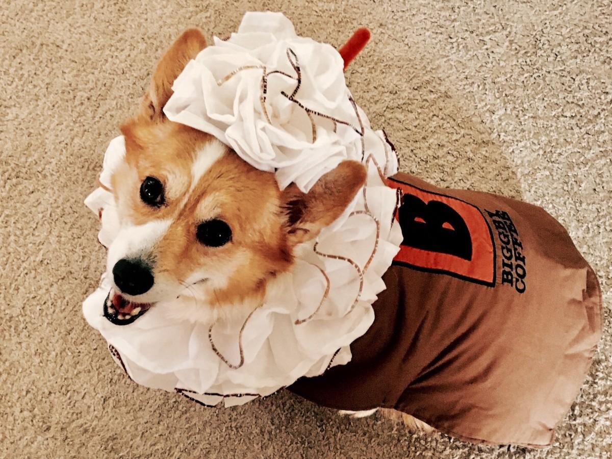 Halloween Restaurant Deals & Specials - dog wearing coffee costume