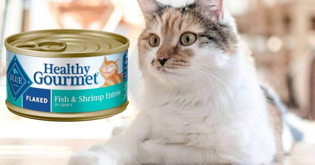 cat looking at can of cat food