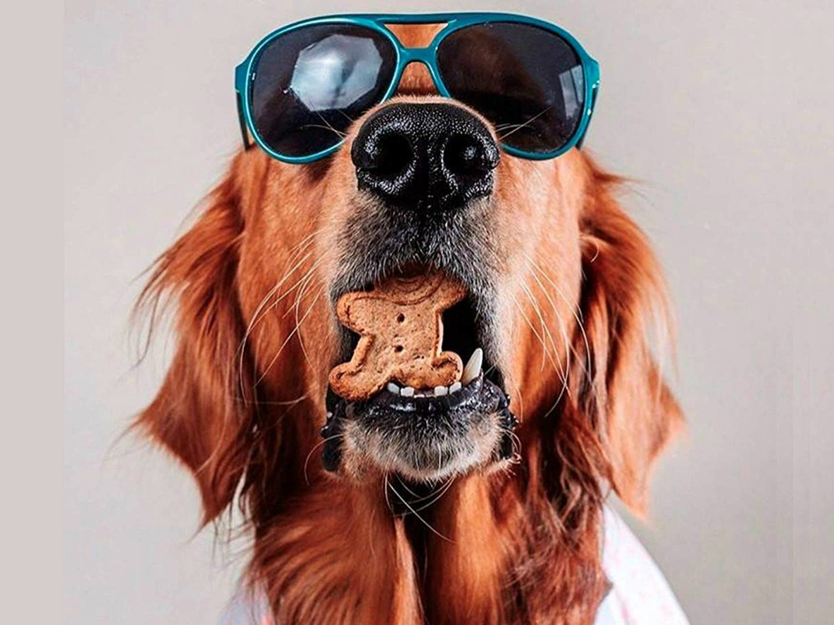 dog with sunglassees and dog treat