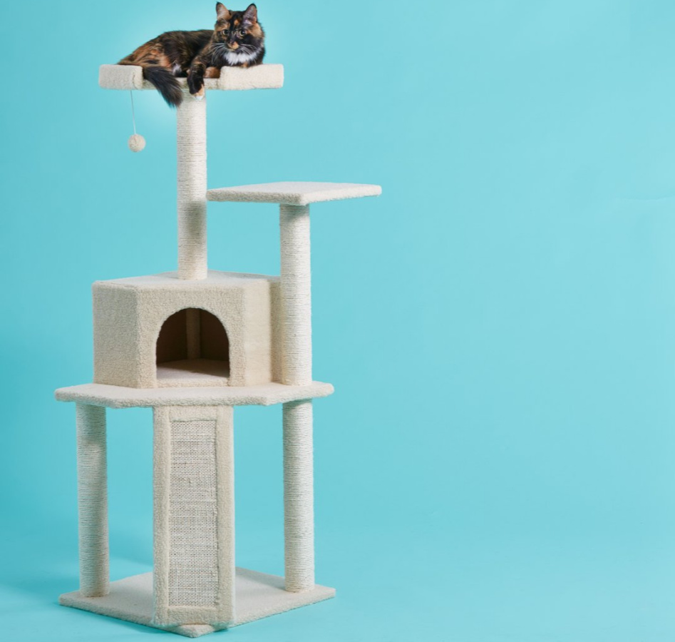 cat laying on top of cat tree