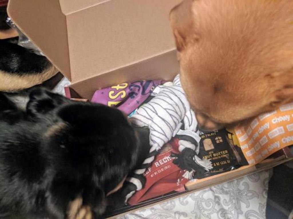 two dogs sniffing chewy goodie box
