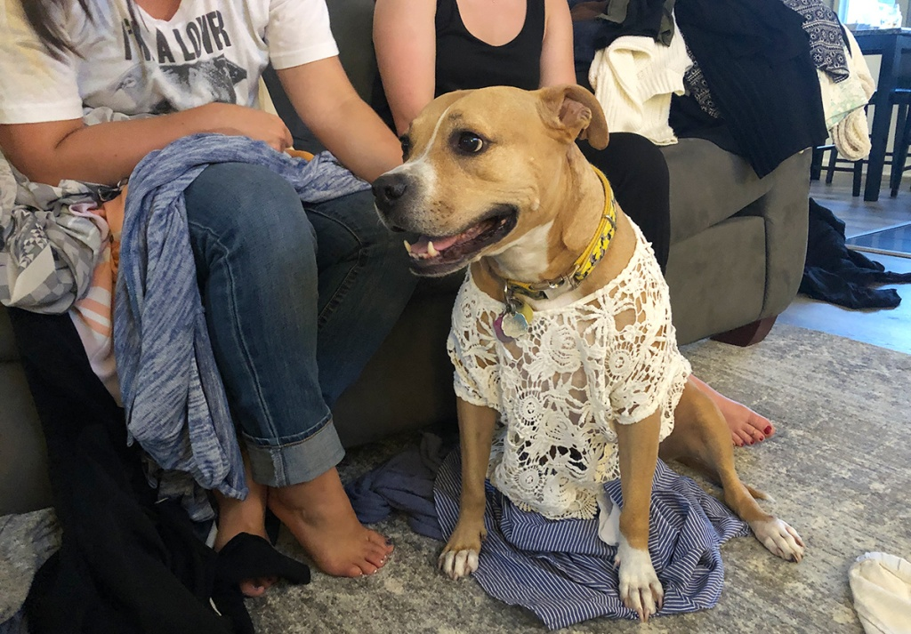 Dog wearing lace top