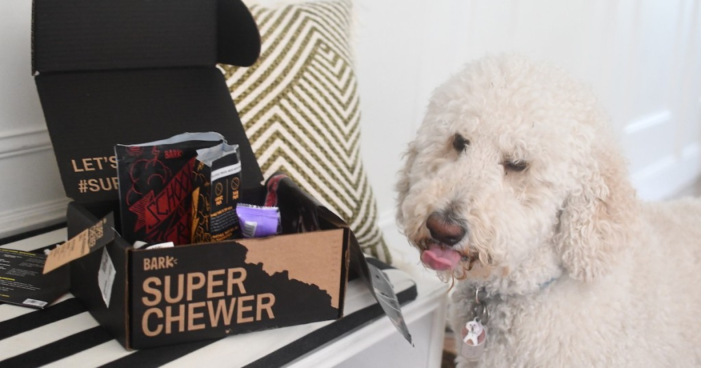 white dog next to super chewer subscription box
