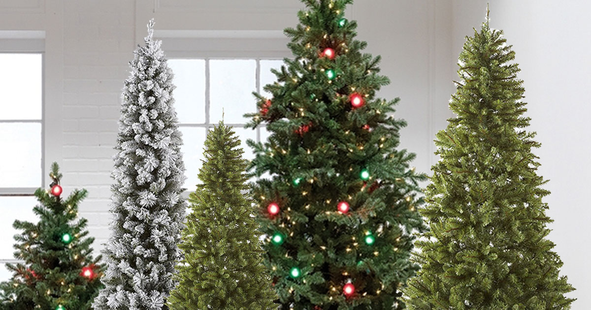 christmas trees in a white room