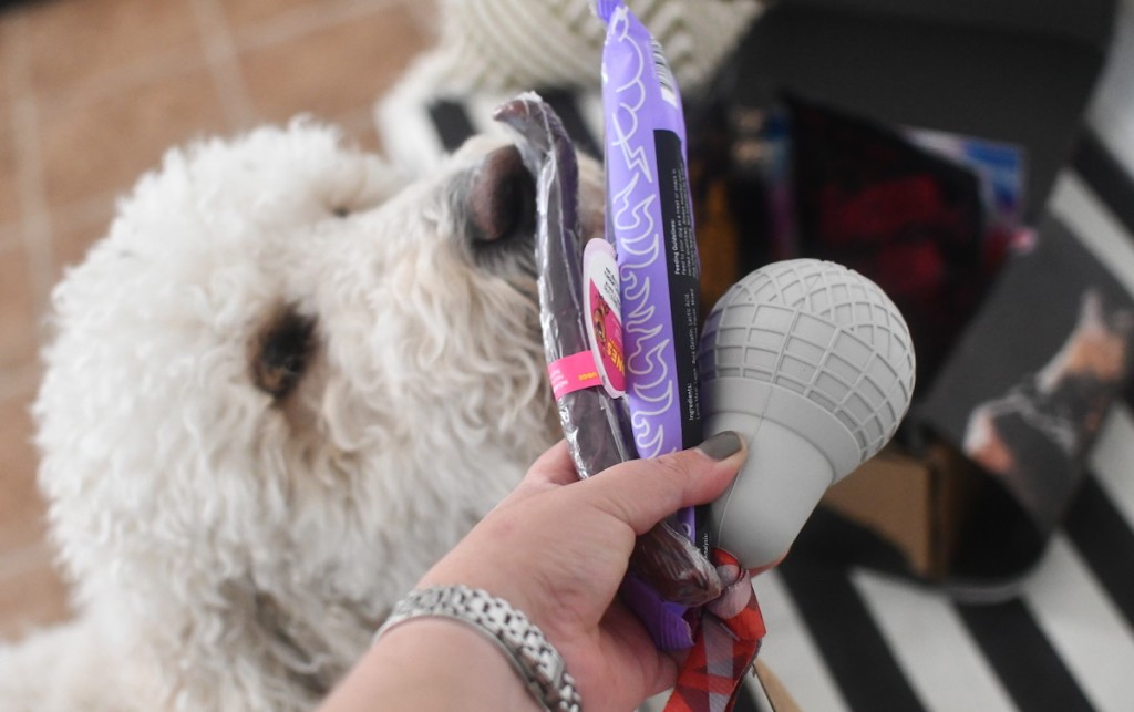 dog smelling toys and treats from super chewer subscription box